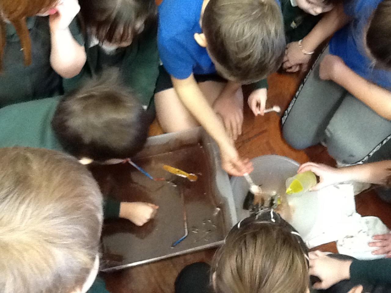 Science Week – Whole School Oil Spill – February 2020